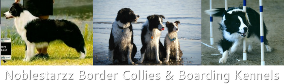 Noblestarzz Border Collies and Boarding Kennels